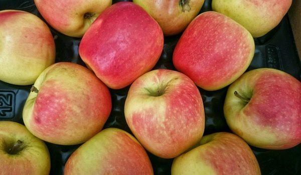 Notre gelée de pommes.