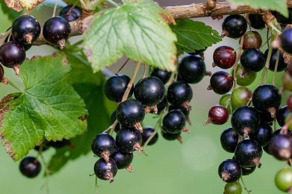 Des sorbets d'exception pour vous amener aux gout de fruits intenses !