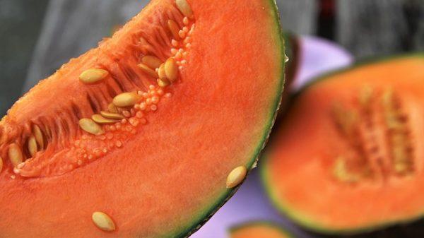 Nous sélectionnons les meilleurs fruits pour fabriquer artisanalement les sorbets. Incorporés crus dans la fabrication, les fruits représentent 60 à 70% de la composition de nos sorbets ce qui en restituent pleinement le goût originel