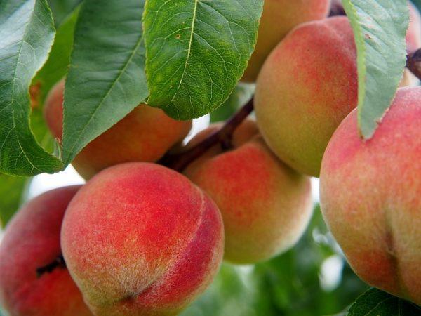 Nos sorbet plein fruit sont fabriqués en bac